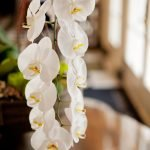 A hanging orchid.