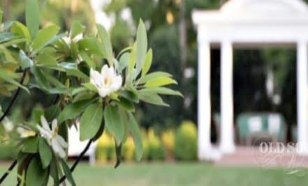 Flowers in the garden of Duke Mansion
